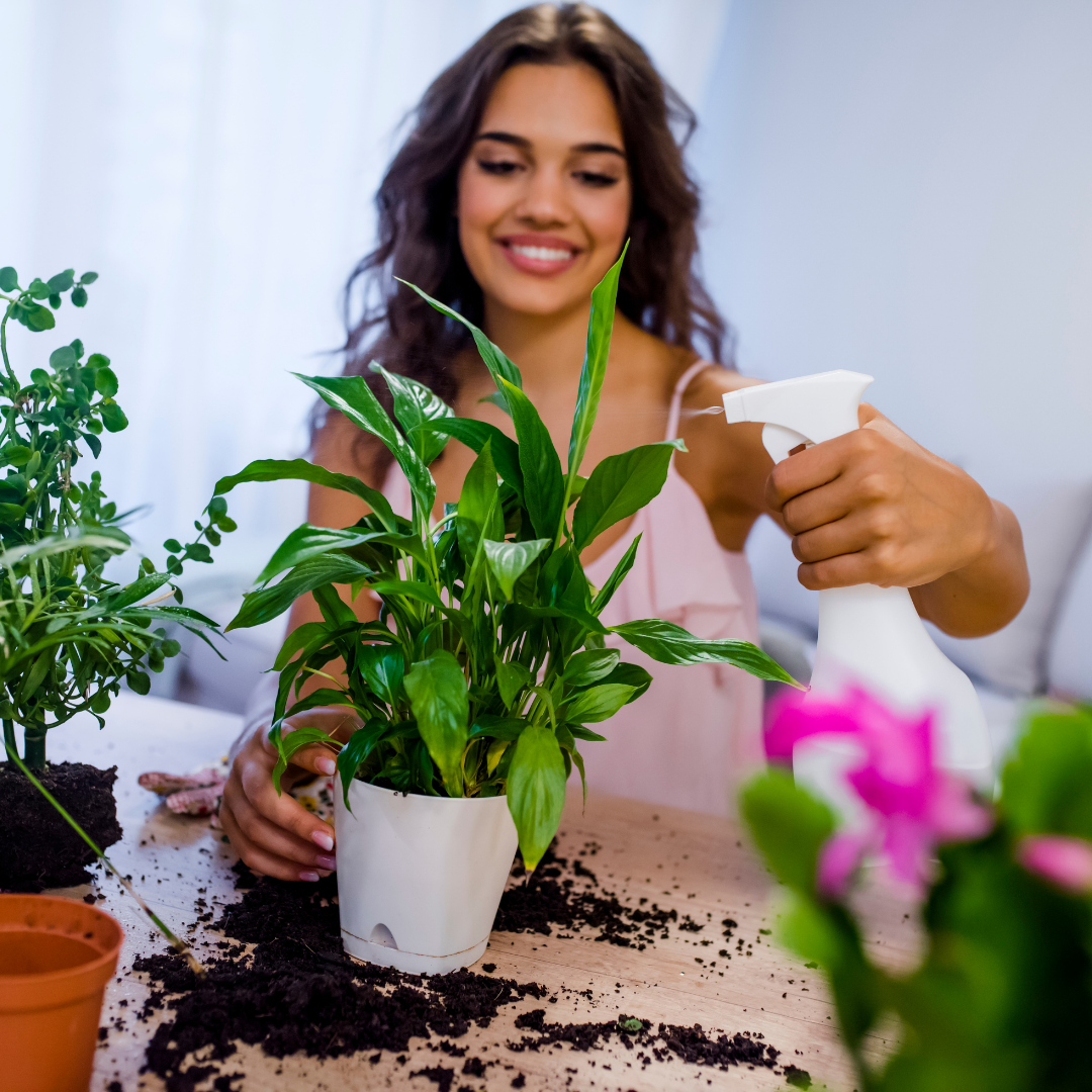 Add Plants Into Your Home for a Relaxing Vibe
