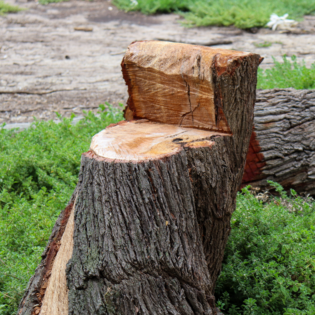 3 Reasons to Need a Tree Lopping or Removal Service
